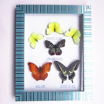 Bar 10 inch blue butterfly photo frames, gift shop hot products